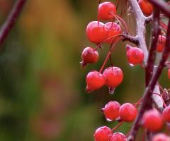 Yağmur ve kırmızının güzelliği