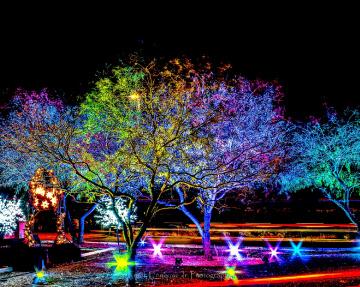 Arizona Christmas Colors