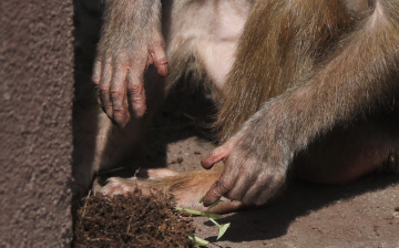 The Hands Of A Baboon