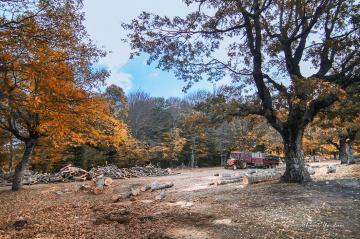 Orman Emekçisi-Çataldağ