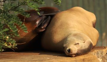 Sea Lion Moment ...