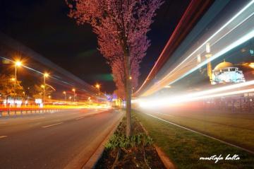 Miniciks Hayatlar  Şehrin Işıkları