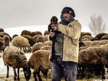 Çoban ve Kuzu