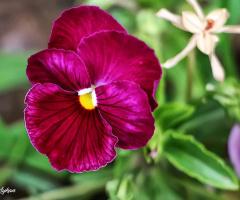 Hayat Çiçekse Aşk Çiçek Balıdır..