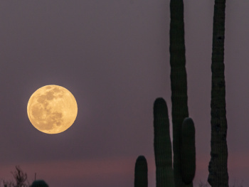 Super Snow Moon From Tucson Arizona