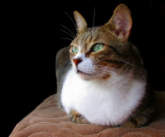 International Cats Day