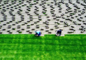 Çim İşçiliği