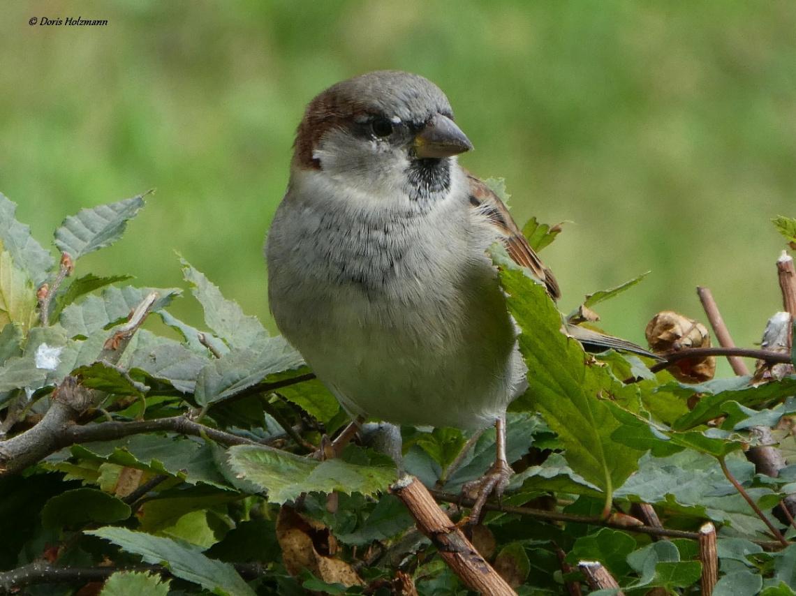 a cute sparrow