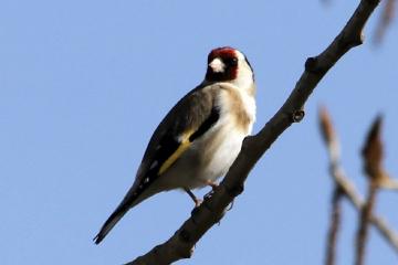 Serçe Kuşu-2