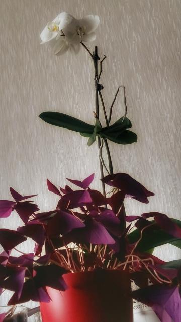 Çiçeğe
