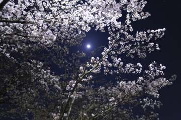 Blossom & Moon