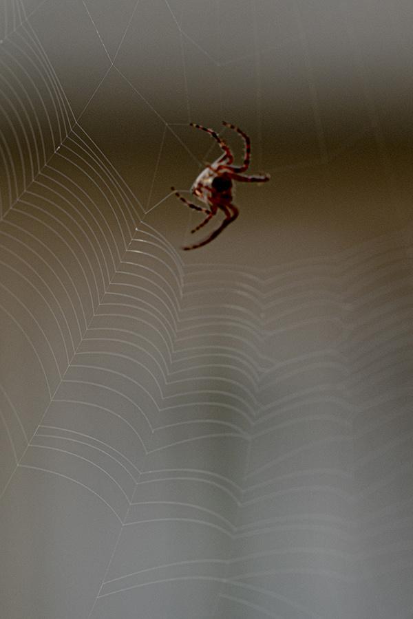Örümcek ağlarını ördü mü?