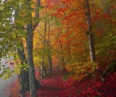 Doğayı Sev Yeşili Koru