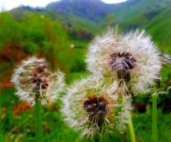 Doğa'da bahar