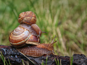 Post-rain snail games