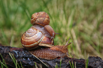Post-rain snail games