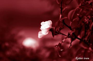Kırmızı & Beyaz