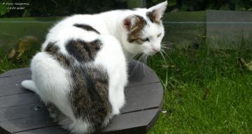 The neighbor's cat is looking for birds (3)