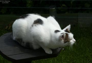 The neighbor's cat is looking for birds (4)