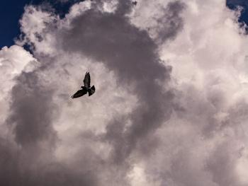 Bulutların Arasında