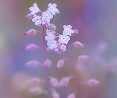 purple time