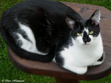 World Cat Day 08.08.2020