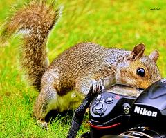 Dünya fotoğrafçılar gününüz. Kutlu olsun.