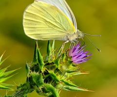 Kelebekler Pır Pır Pır :))