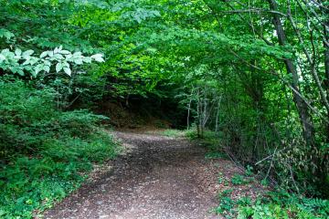 Ormana Giriş