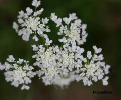 Karınca ve Çiçek