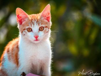 a Cat | 2