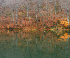 Deep Autumn