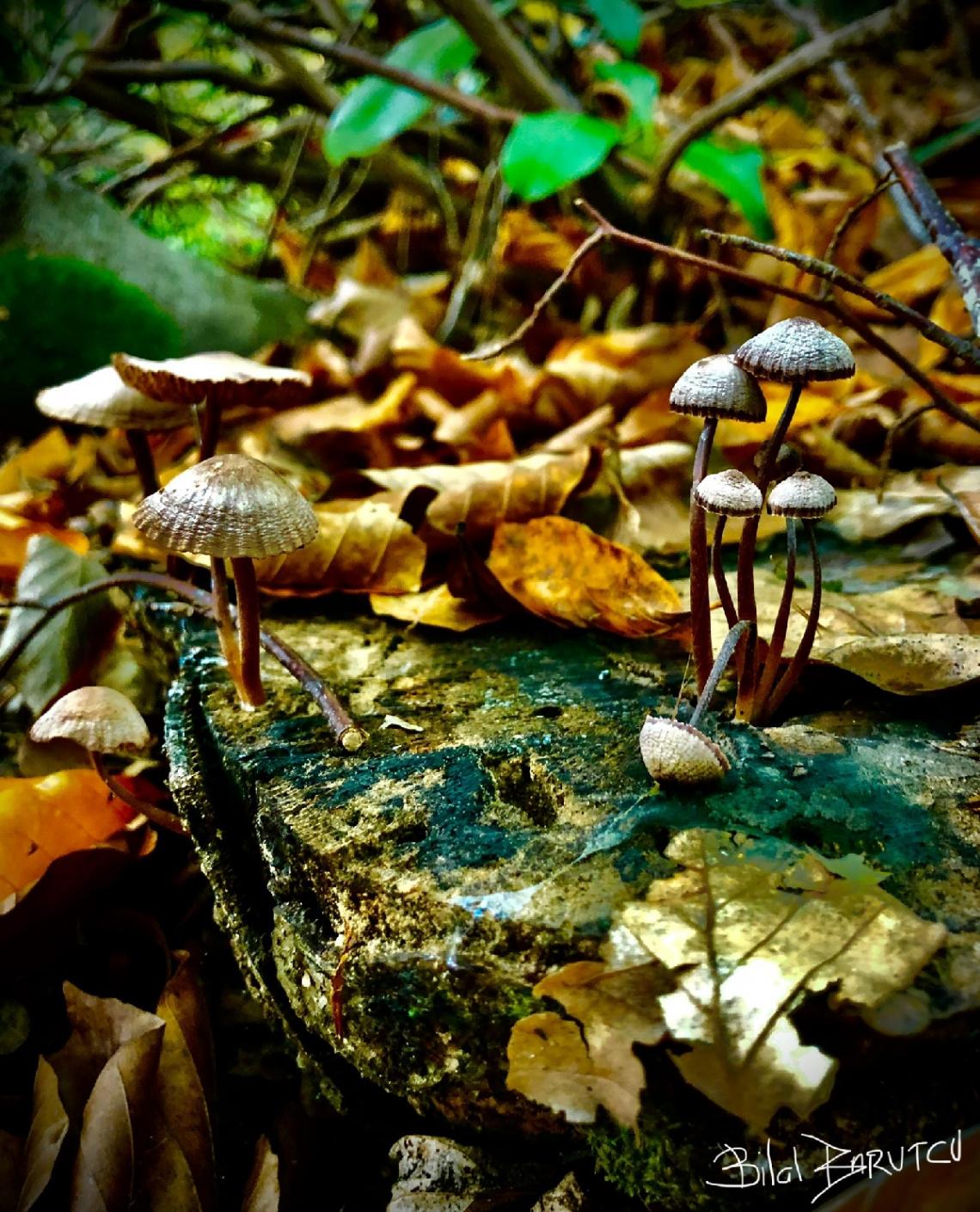 Doğa,mantarlar , sonbahar