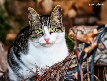 Bir Kedim Bile Yok Anlıyor Musun..
