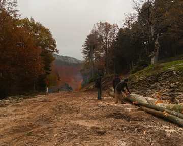 Orman İşçileri