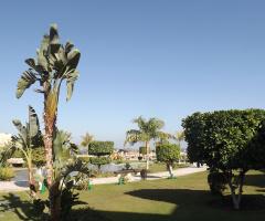 Egypt   - Alain alsokhna