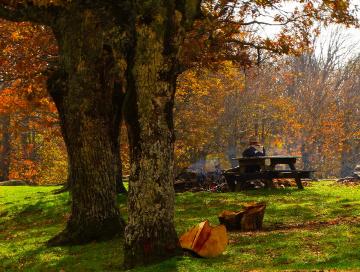 Çataldağda Orman İşçisi