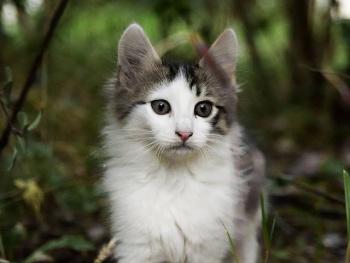 Pisicik 1