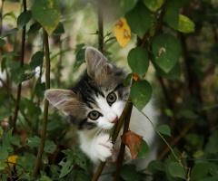 Pisicik 2