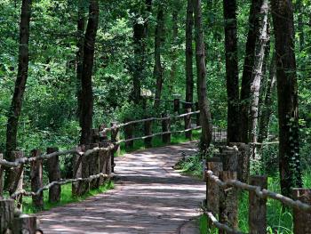 Ormanya Yolları