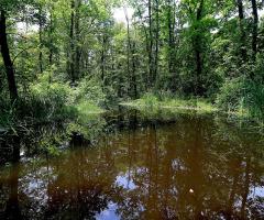 Ormanyada Göl