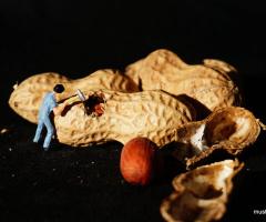 Miniciks hayatlar  Fıstıkçı