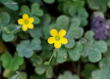 Sana Sarı Çiçekler Aldım Çiçek Pazarından..
