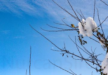 Kar,Kuş ve Ay
