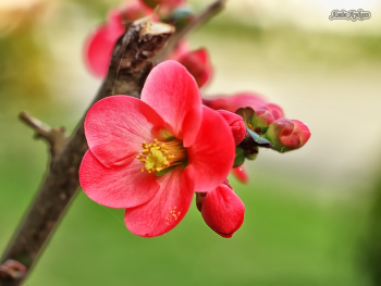 Bu Çiçeğimizde Güzel İnsanlara Gelsin..