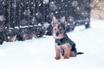 Just puppy in snow