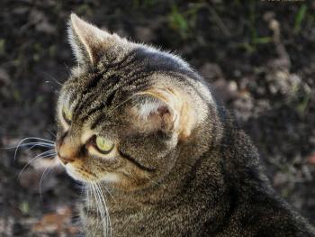Neighbour's cat