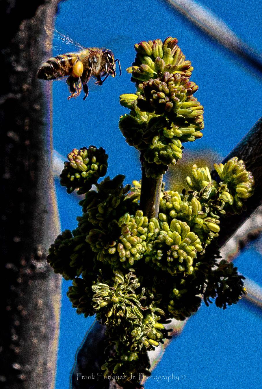 Natures Sonoran Desert Beeuty