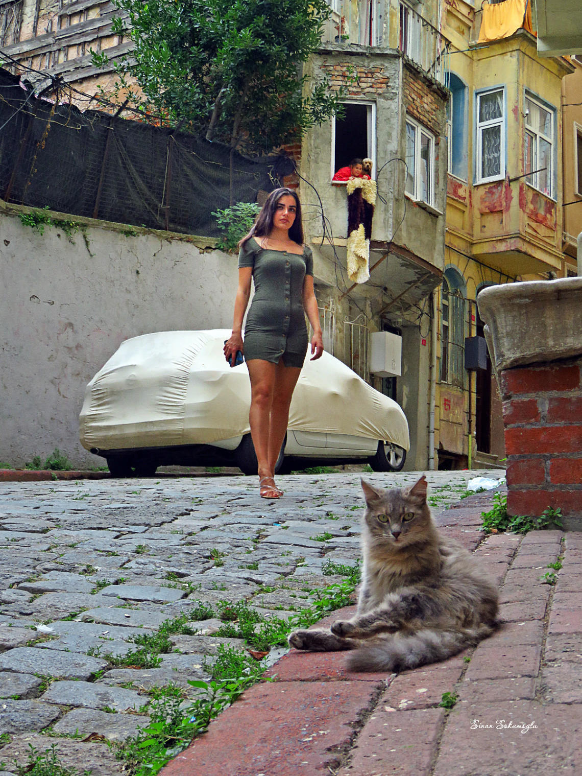 model kedi çocuk köpek