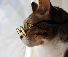 Cat with glasses III